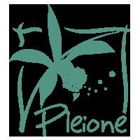 pleione fleuriste 77